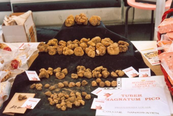 White Alba truffle